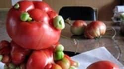 FOTO Fukushima: verdure mutanti e frutta deformata. Colpa del disastro