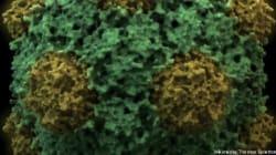 Deux types de virus géants découverts par des scientifiques