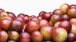 11 Things You Need To Know About Camu