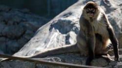 Animal Exodus From Flood-Ravaged Zoo