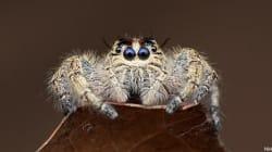 Des araignées comme vous n'en avez jamais