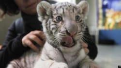 È la prima volta che nasce in cattività (FOTO,