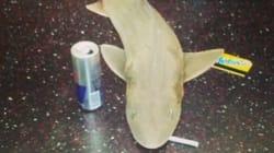 Mistero dello squalo in metro risolto