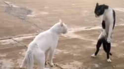 25 vídeos de gatos de menos de 30