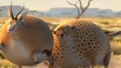 Que ce passerait-il si les animaux étaient ronds?