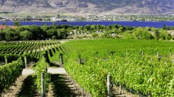 Okanagan Valley Among Best Wine Regions IN THE