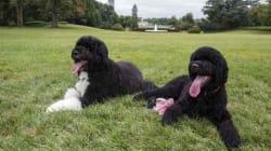 Alla Casa Bianca arriva Sunny: è la nuova compagna del cane Bo (VIDEO,