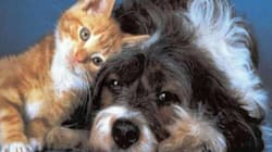 Cane dona il sangue per salvare il gatto