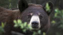 Increased Bear Sightings Lead To Campground