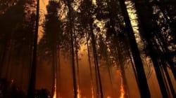 D'impressionnantes photos du gigantesque incendie près du parc de