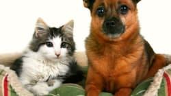 Retour de vacances: les conseils pour que chiens et chats gardent le