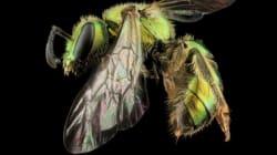 Des abeilles sous toutes les facettes