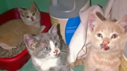 Kittens Thrown From Truck