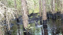 More Protection Work Ordered At Ongoing Oil Spill
