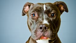Woman Charged For Using Pit Bull As
