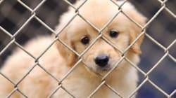 Une pétition presse Kijiji d'interdire la vente d'animaux
