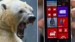 Man's Phone Thwarts Polar Bear