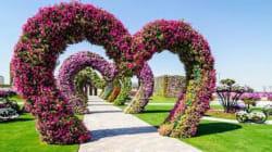 Il giardino dei miracoli di Dubai: 45 milioni di fiori