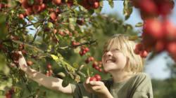 10 bonnes adresses pour cueillir des pommes en
