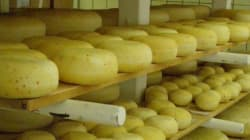 Cheese Caused E. Coli Death: