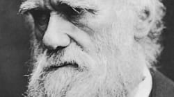 The Conservatives' Social Darwinism is Fine - Only it Goes Against Western