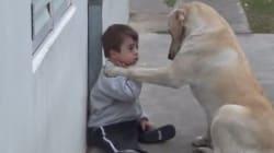 Cuando un perro te demuestra que tienes un amigo