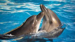 Les dauphins, bien plus bêtes qu'on ne le
