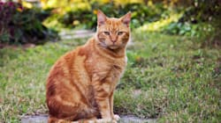 Implantation de micropuces sur des chiens et des chats à