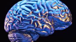 Amener l'étude du cerveau et de la psychologie sur le web - Jean-François
