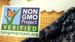 What's Brewing Beneath the GMO Food Labelling