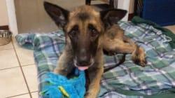Cane trovato incatenato dopo 4 anni