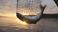 Despite Fukushima, Scientists Say Eating West Coast Fish is