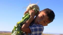 PHOTOS: Step into Harvests Around the