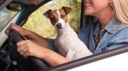 Les règles de sécurité en voiture avec nos