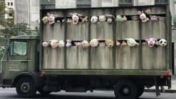 Un camion di animali per le strade del