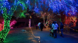 GREAT News For Zoolights