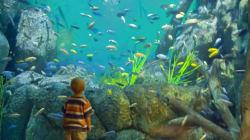 Floating Aquarium Goes