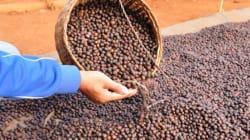 Du café 100% certifié équitable dans les établissements Van