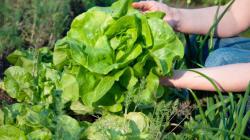 Ecotaxe: les agriculteurs ont fait preuve d'imagination pour faire parler