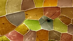 Ces photos sont-elles microscopiques ou macroscopiques