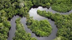 Peut-on à la fois conserver les forêts tropicales et lutter contre la
