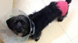 Rescued Squamish Pup