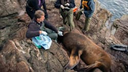 WATCH: Sea Lions Saved From