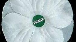 MP Calls White Poppies