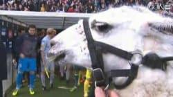 Serge le lama, invité d'honneur du match