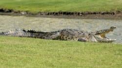 Crocodile Attacks Canadian In