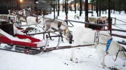 'Santa Safari' Worker Stabbed To Death In Arctic