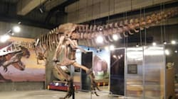 G'day Dino: Canadian Celebrity T. Rex Stomping In