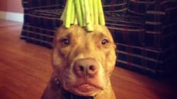 Scout, il cane equilibrista