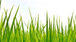 Toujours plus vert chez le